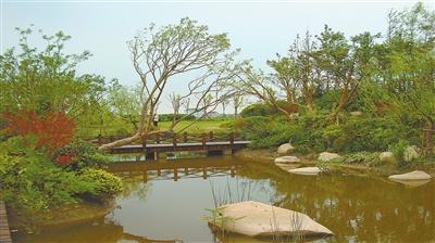 崇明绿洲长岛风景图